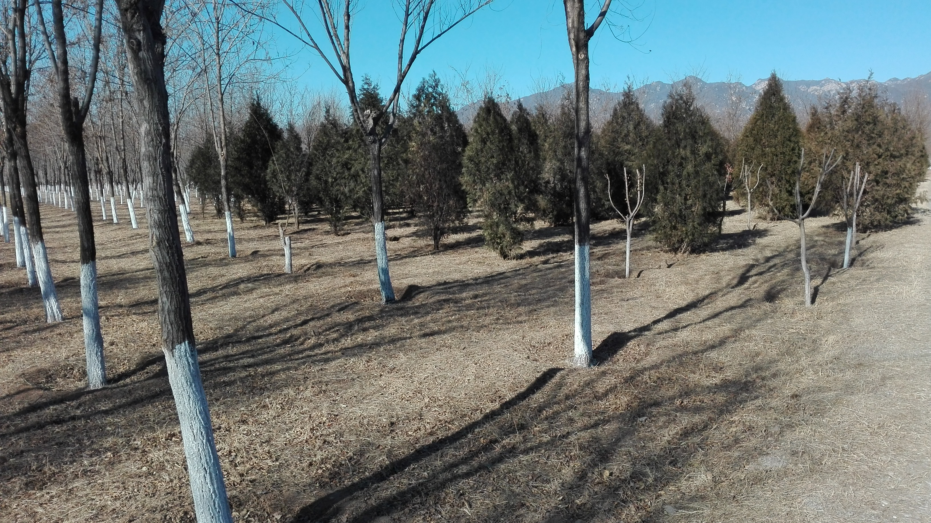 2018-01-24_Miyun_Afforestation