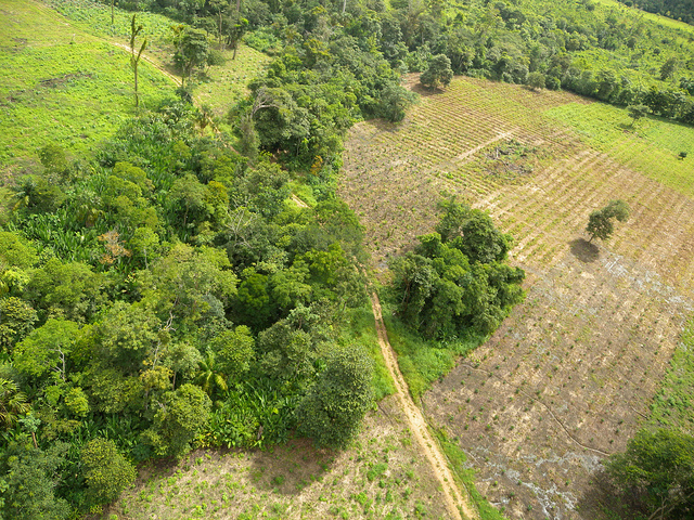ForestFinance in Panama (@ForestFinance)