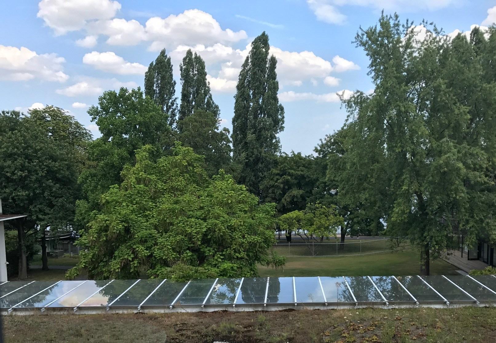EFI Bonn office window view