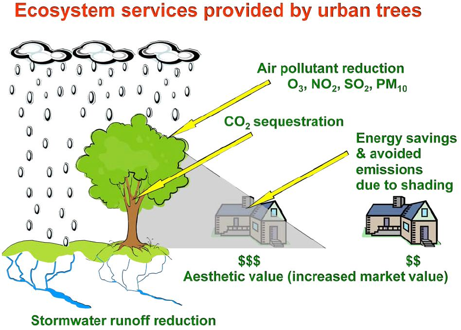 blogpost_Urban-Forest-Benefits-Diagram.jpg