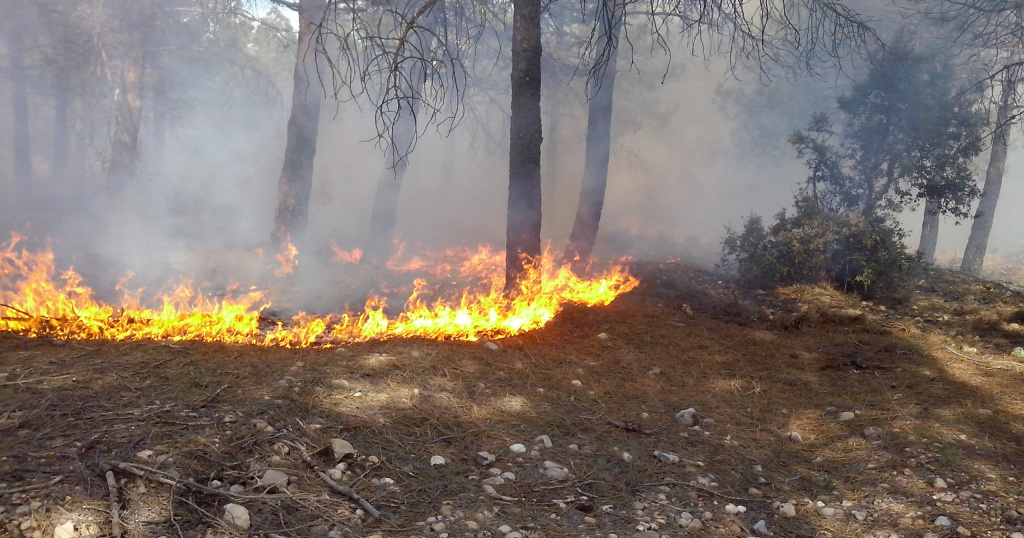 European Forest Risk Facility – Resilience Blog