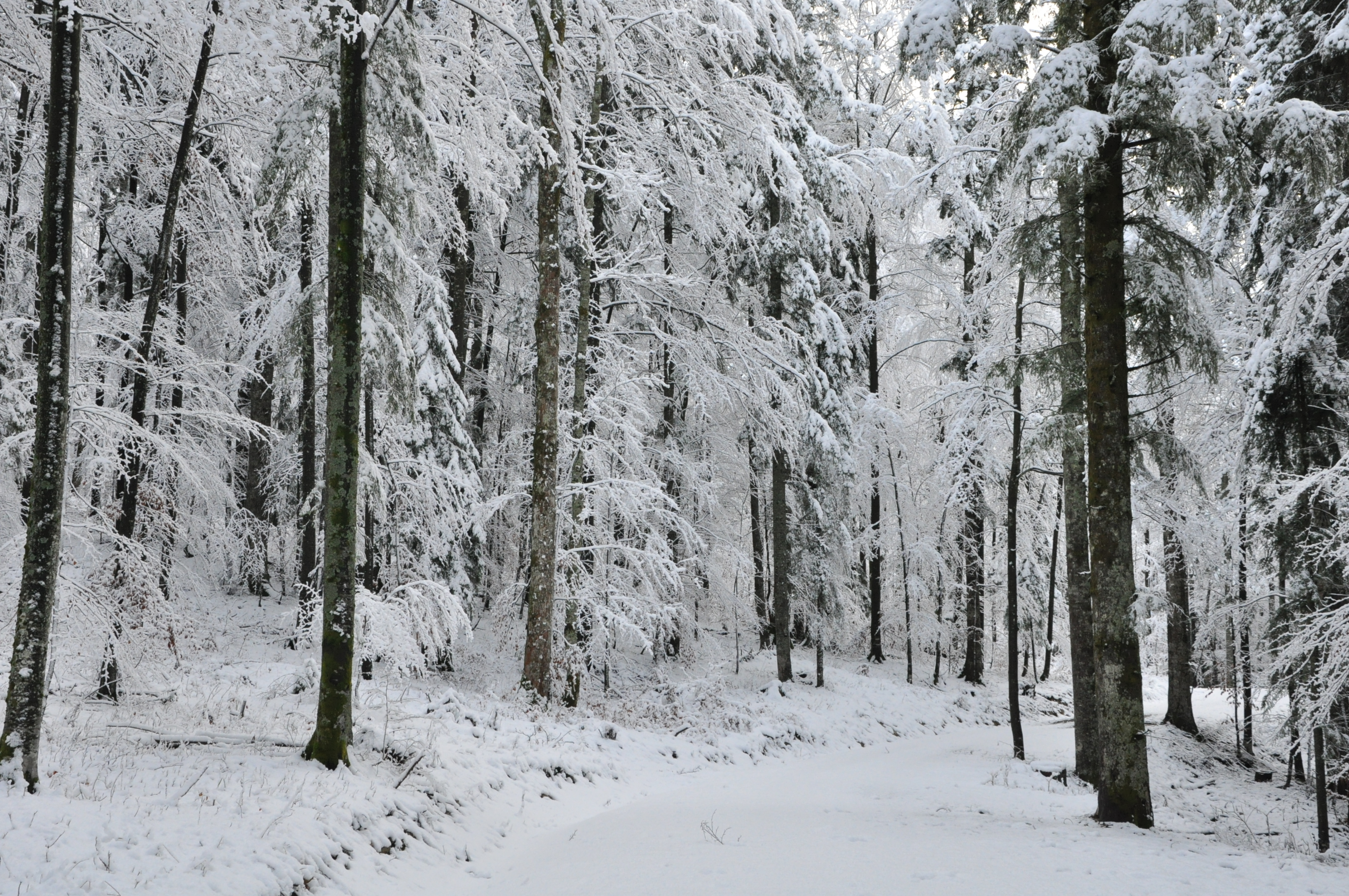 Winter in the Slovenian forest (photo by @Simon Poljanšek)