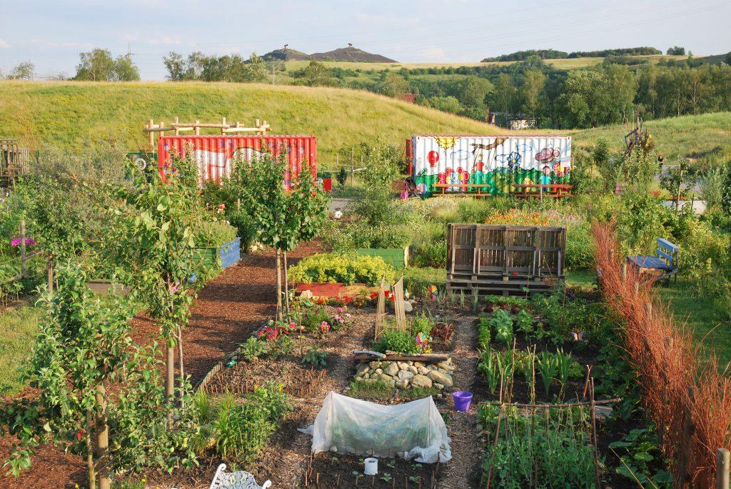 Urban Gardening im Biomassepark Hugo (Foto: Georg Nesselhauf)
